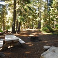 One of eight campsites in Bonney Meadows Forest Camp.- Bonney Meadows Forest Camp