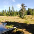 Bonney Meadows.- Bonney Meadows Forest Camp