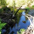 Barlow Creek along the primitive campsites.- Barlow Crossing Campground + Campsites