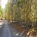 Barlow Rd/NF-3530.- Barlow Crossing Campground + Campsites