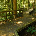 Boardwalk along the trail to the Cascade Streamwatch pavilion.- Wildwood Recreation Site