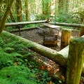 Reservable picnic site near the Salmon River.- Wildwood Recreation Site