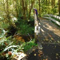 Bridge near the Cascade Salmonwatch pavilion.- Wildwood Recreation Site
