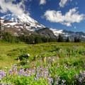 Spray Park and Mount Rainier (14,411').- Spray Waterfall + Spray Park Hike