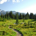 Mount Rainier's Spray Park.- Spray Waterfall + Spray Park Hike