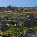 Tundra-like landscape on the Burroughs.- Burroughs Mountain Hike