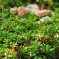 Unidentified species (help us identify it by providing feedback).- Burroughs Mountain Hike