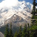 View of Mount Rainier (14,411') from the Emmons Glacier Viewpoint.- Silver Forest Trail