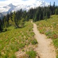 Mount Rainier (14,411') from the Silver Forest Trail.- Silver Forest Trail