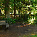 One of eight walk-in campsites at La Wis Wis Campsites.- La Wis Wis Campsites (Loop H)