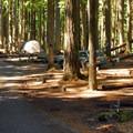 Ohanapecosh Campground.- Ohanapecosh Campground