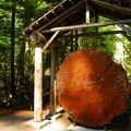 Historic old-growth forest memorial. This Douglas fir dated to 1293 A.D.- Silver Falls and Hot Springs Loop Trail