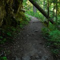 Silver Falls Loop Trail.- Silver Falls and Hot Springs Loop Trail
