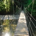 Suspension bridge over the Ohanapecosh River.- Grove of the Patriarchs
