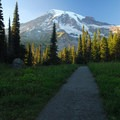 Mount Rainier (14,411') from the Nisqually Vista Trail.- Nisqually Vista Trail