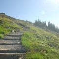 Paradise Park, Skyline Trail: Trail leading up to Panorama Point.- Skyline Trail Hike
