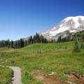 Paradise Park, Skyline Trail.- Skyline Trail Hike