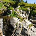 Paradise Park, Mount Rainier National Park.- Skyline Trail Hike