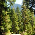 Cougar Rock Campground.- Cougar Rock Campground