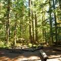 Typical campsite at Cougar Rock Campground.- Cougar Rock Campground