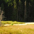 Longmire meadow and wetlands.- Longmire + National Park Inn