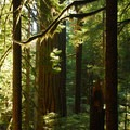 Twin Firs Trail.- Twin Firs Trail