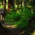 The trail leading up to George Lake.- Gobblers Knob + Lake George Hike