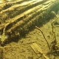 Unidentified fish species in Geoge Lake (help us identify it by providing feedback).- Gobblers Knob + Lake George Hike