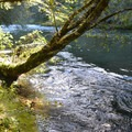 North Santiam River from Whispering Falls Campground.- Whispering Falls Campground