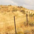 Abandoned farmland above the John Day River canyon.- Cottonwood Canyon State Park