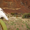 A cow skull along the Pinnacles Trail in Cottonwood Canyon State Park.- Cottonwood Canyon State Park