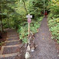 Cape Horn Loop Trail at the Salmon Falls Road trailhead.- Cape Horn Loop Hike