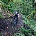 One of the smoother sections of the South Salmon Creek Trail.- South Salmon Creek Trail and Eugene to Crest Trail Loop