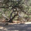 A campsite on A Loop (1-28).- El Capitan State Beach Campground