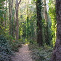 Historic Trail.- Sutro Forest + Mount Sutro Open Space Reserve