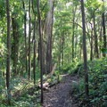 The North Ridge Trail.- Sutro Forest + Mount Sutro Open Space Reserve