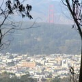 The view north across the Richmond neighborhood, The Presidio, and the Golden Gate Bridge towers.- Sutro Forest + Mount Sutro Open Space Reserve