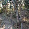 Lands End Coastal Trail is flat apart from this single hill, making it a favorite with runners.- Lands End Coastal Trail