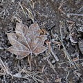 Frosted leaf on the shoreline at Pamelia Lake.- Pamelia Lake + Grizzly Peak