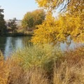 Fall foliage bordering the Yakima River.- Chamna Natural Preserve