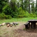 A typical campsite in Paradise Campground.- Paradise Campground