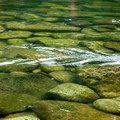 You never want to leave the Selway's gin-clear water.- Selway River