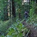 Nearing the top of Lost Creek Trail.- Lost Creek Trail + Sawtooth Trail + Hardesty Trail Loop