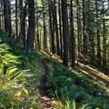 - Lost Creek Trail + Sawtooth Trail + Hardesty Trail Loop