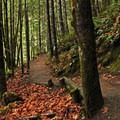 The trail weaves through beautiful old-growth forest.- Terwilliger Hot Springs