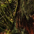 Moss adorns most surfaces under the canopy above.- Terwilliger Hot Springs