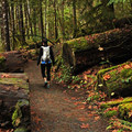 The trail is well maintained and relatively flat.- Terwilliger Hot Springs