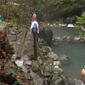 The tiered pools provide temperature options for soakers.- Terwilliger Hot Springs