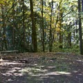 One of the large, sheltered sites at Ivan Oakes Campground.- Ivan Oakes Campground