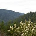 The view into Cummins Creek drainage on the climb.- Cummins Creek Loop